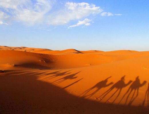Marokko-Sahara-kamelentocht