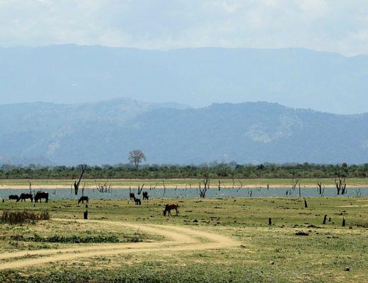 Uda-Walawe-Sri-Lanka