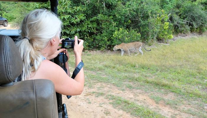 Nationaal parken Wilpattu luipaard