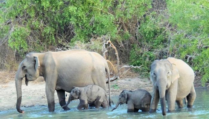 Nationaal parken Sri Lanka