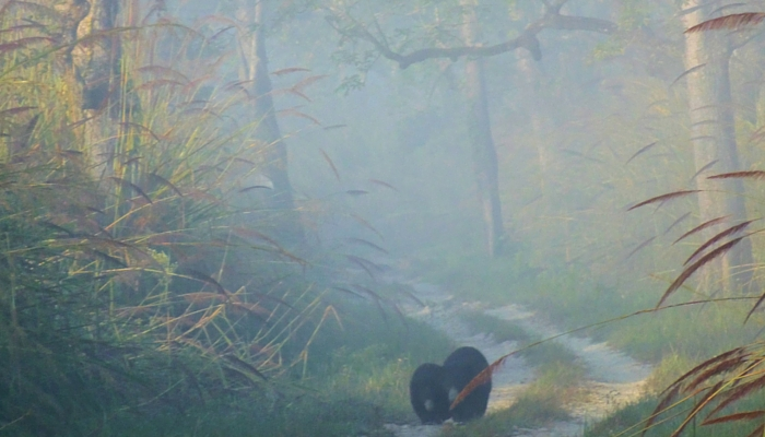 camera - zwarte beer