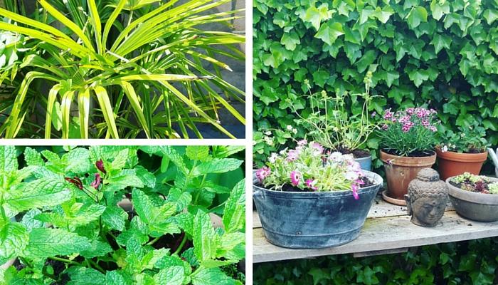 Onze tropische tuin