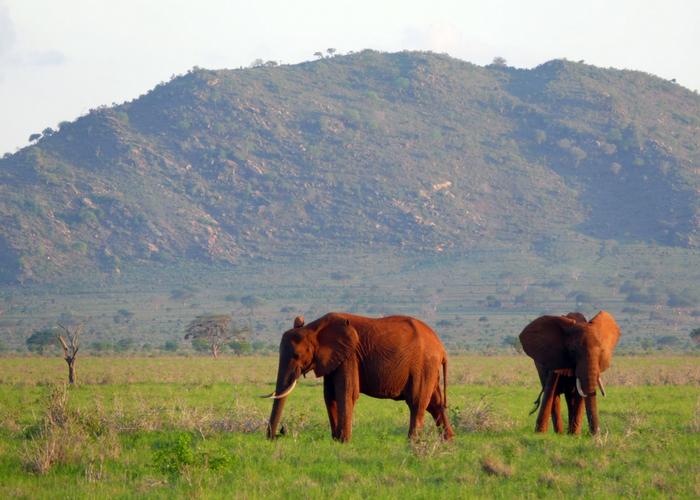 Rode olifant tsavo east