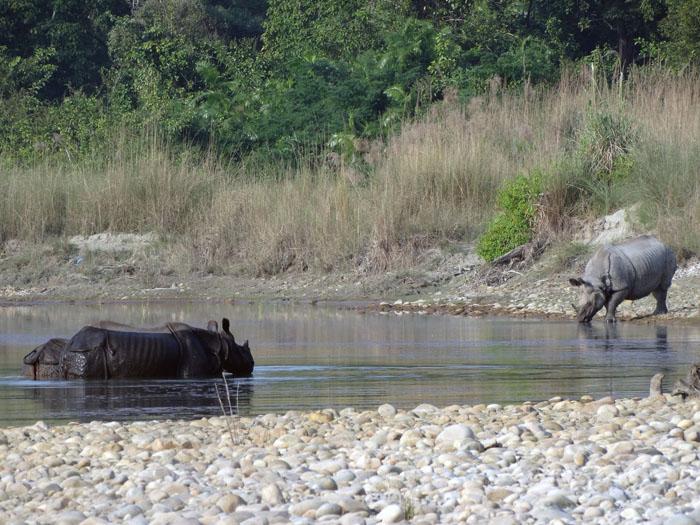 Bardia nationaal park