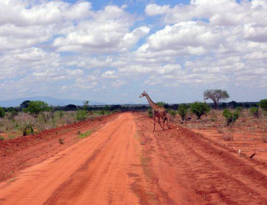 Kenia-wildlife-Tsavo
