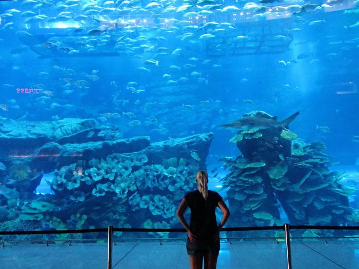 Dubai Aquariun