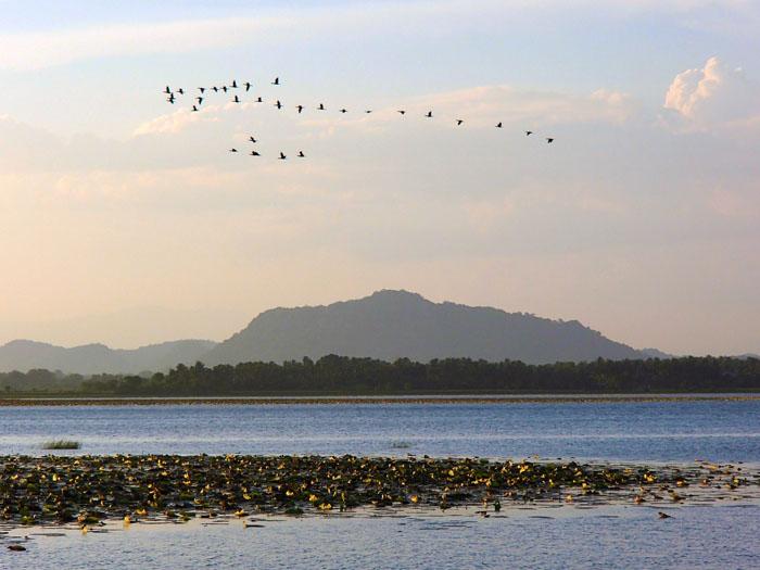 Sri-Lanka-meer-Tissamaharama
