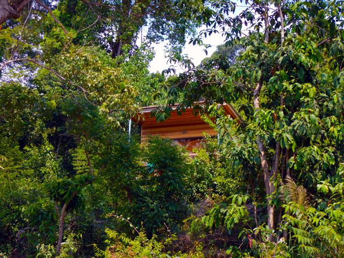 Cambodja-jungle-Monkey-Maya