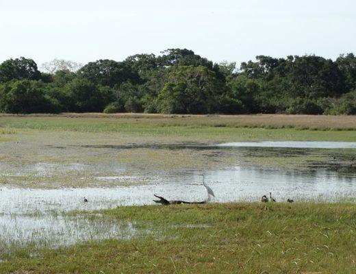 Wilpattu Nationaal park Sri Lanka