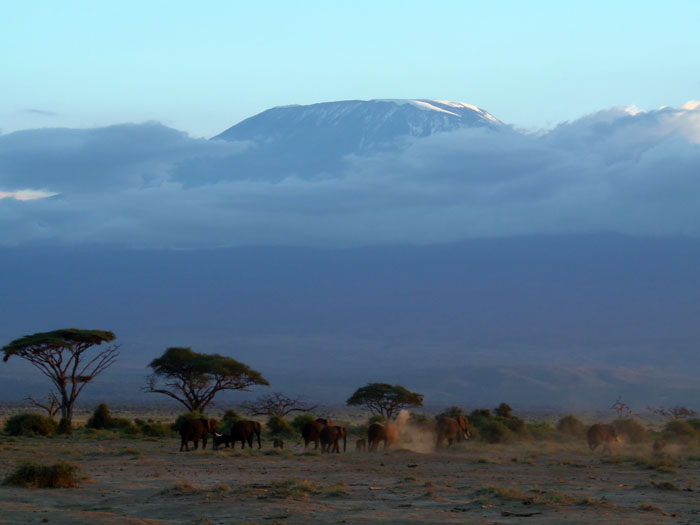 Mount Kilimanjaro in Amboseli Nationaal Park Kenia