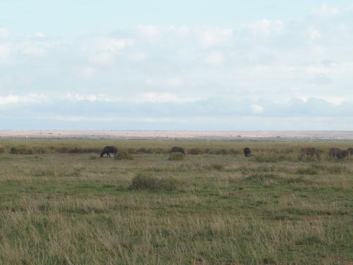 Uitgestrekte dorre vlaktes van Amboseli Kenia