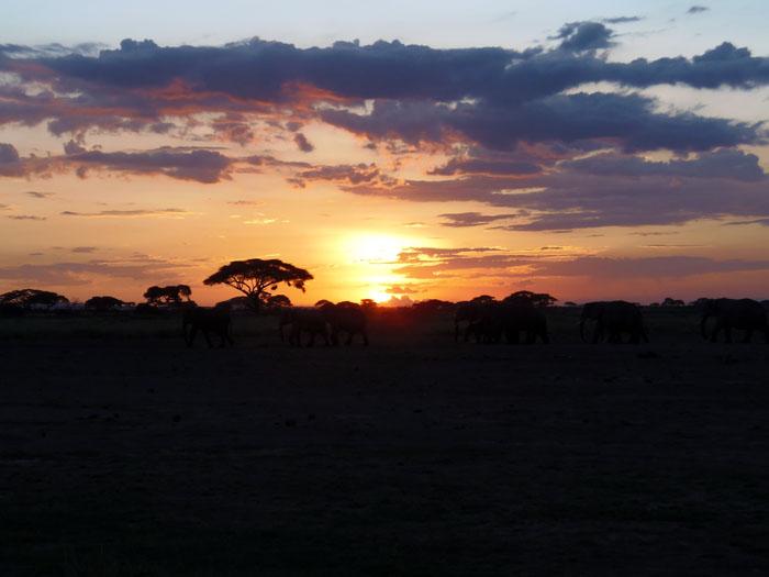 Olifanten bij zonsondergang in Amboseli Kenia