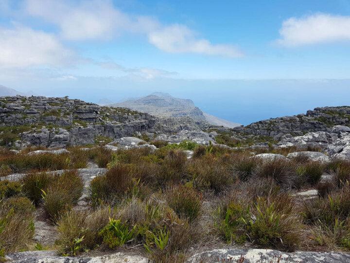 Hike en wandeling naar de Tafelberg in Kaapstad